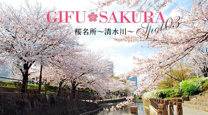 桜の名所清水川
