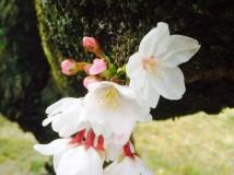「幹から咲いた力強さ」
