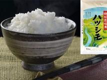 岐阜県産 特別栽培米ハツシモ10kg