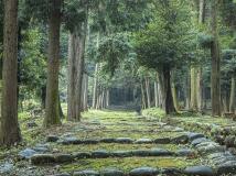 @sugiyama.hiroshi/伊波乃西神社参道